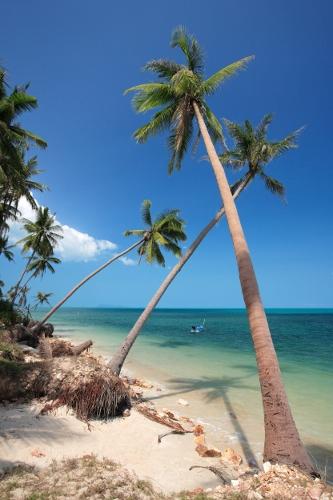 Palmut huojuvat hiekkarannalla Thaimaassa.