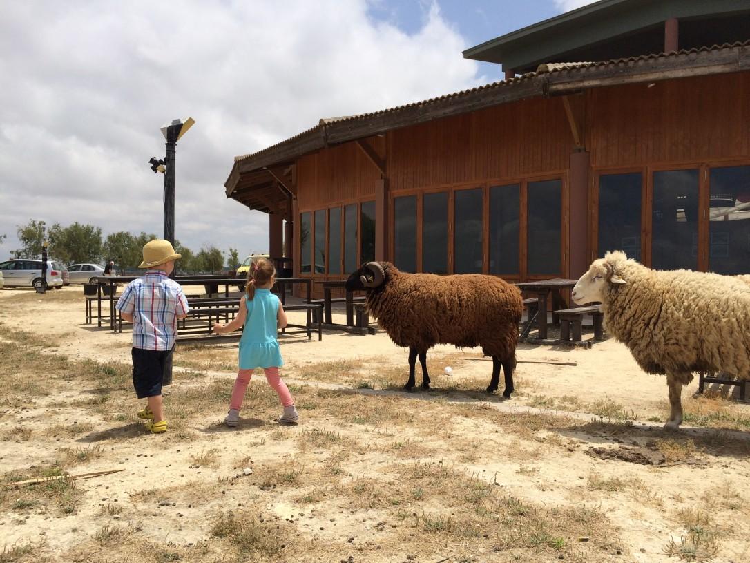 Vapaana kulkevat kotieläimet jaksoivat ihastuttaa lapsia