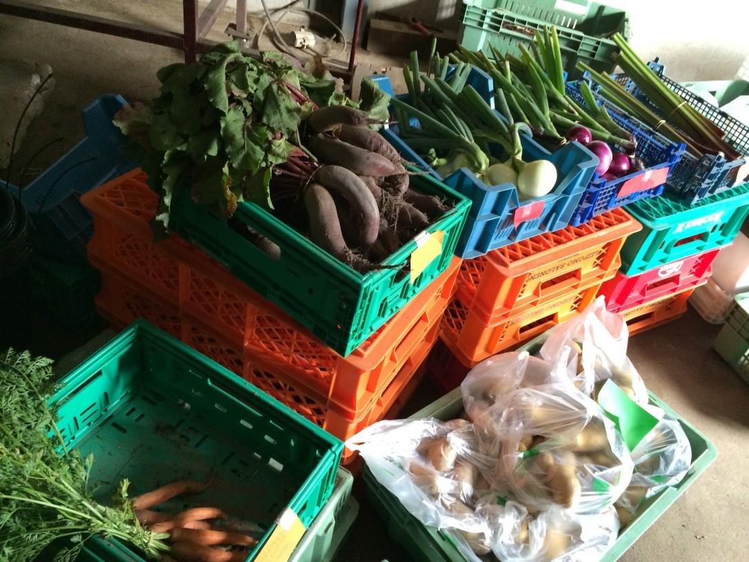 Sjöbergin maatilapuodista voi käydä omatoimisesti hankkimassa tuoreet vihannekse, perunat ja kananmunat. Isäntäväen ollessa poissa, rahat jätetään pieneen lippaaseen.