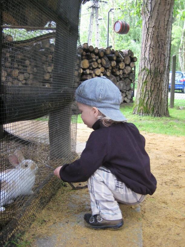 Muscatlissa lapsetkin viihtyvät, ruokapöytien vieressä on laaja, aidattu nurmikenttä ja kaneja saa hoitaa mielin määrin.