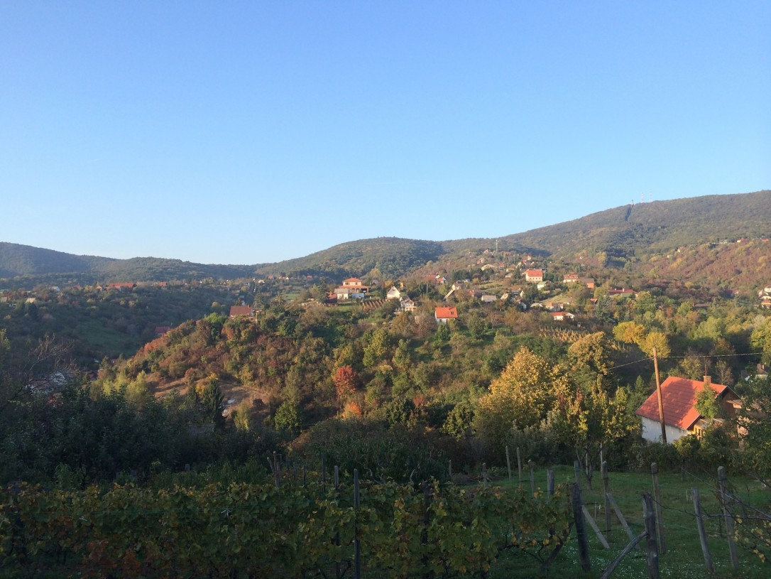 Ystäviemme viinitila sijaitsee vain 10 minuutin automatkan päässä kaupungin keskustasta.