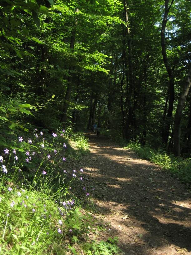metsässä 3