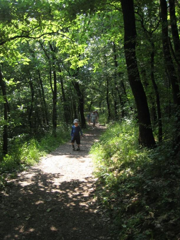 metsässä3