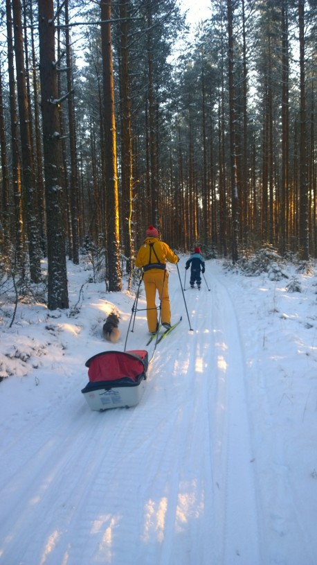 Nuorimmaisemme otti hyvät päiväunet hiihtolenkillä ahkiossa.