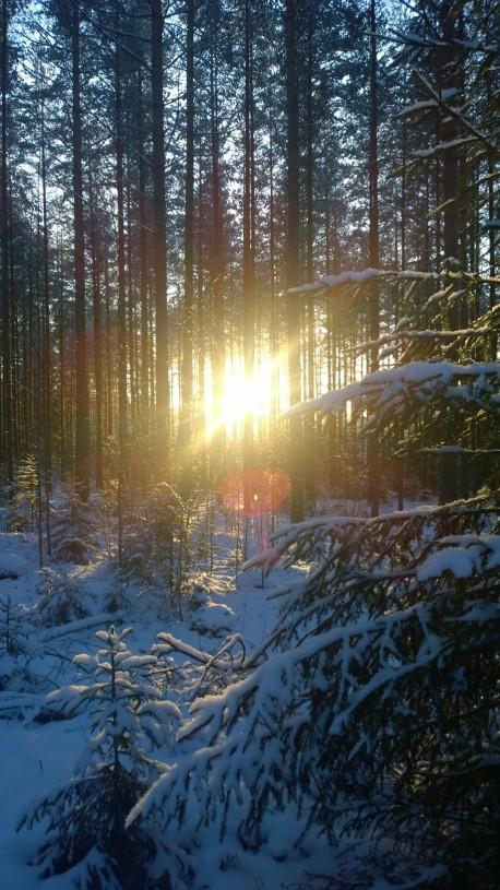 Minkä ilon joulukuussa pilkottava aurinko voikaan tuoda...
