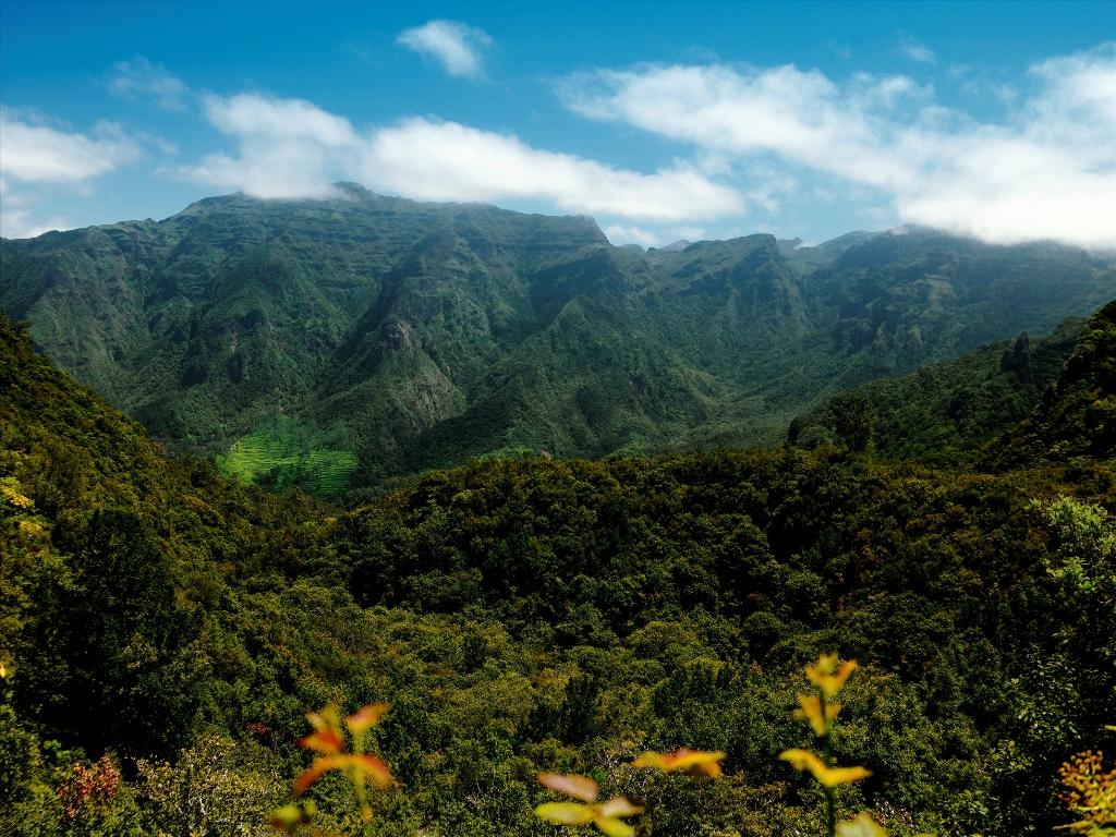 Madeiralla vehreys ja vihreys on aivan omaa luokkaansa.