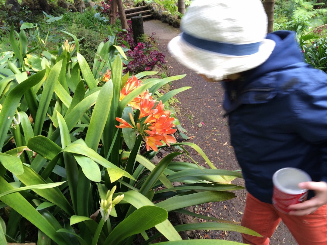 Tuhansia kukkia, lintuja ja piilopaikkoja - siitä on hyvä puisto tehty