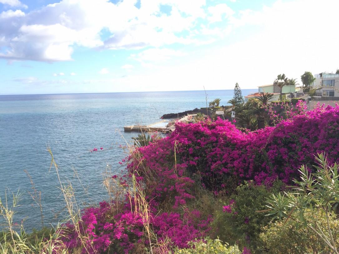 Madeiralla kukkii aina. Yksi suosikeistani on kirkkaan punaisen väreissä kukkiva Bougainville.