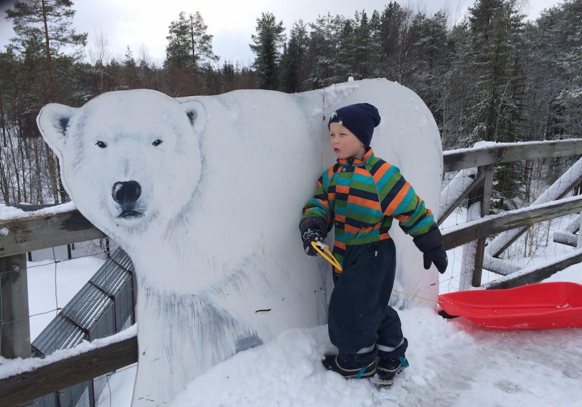 Näin valtavia jääkarhut ovat todellisuudessa.