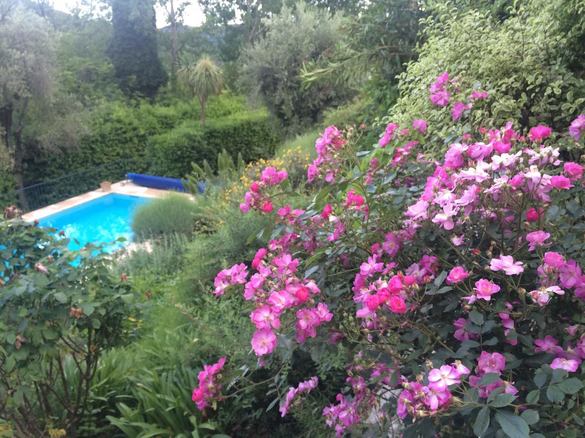 Sateen jälkeen puutarha oli kauneimmillaan ja kaikki tuoksut tosi voimakkaina.